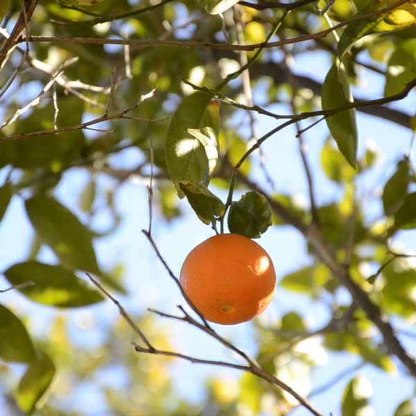 Biota Specialist Ingredients Oranges